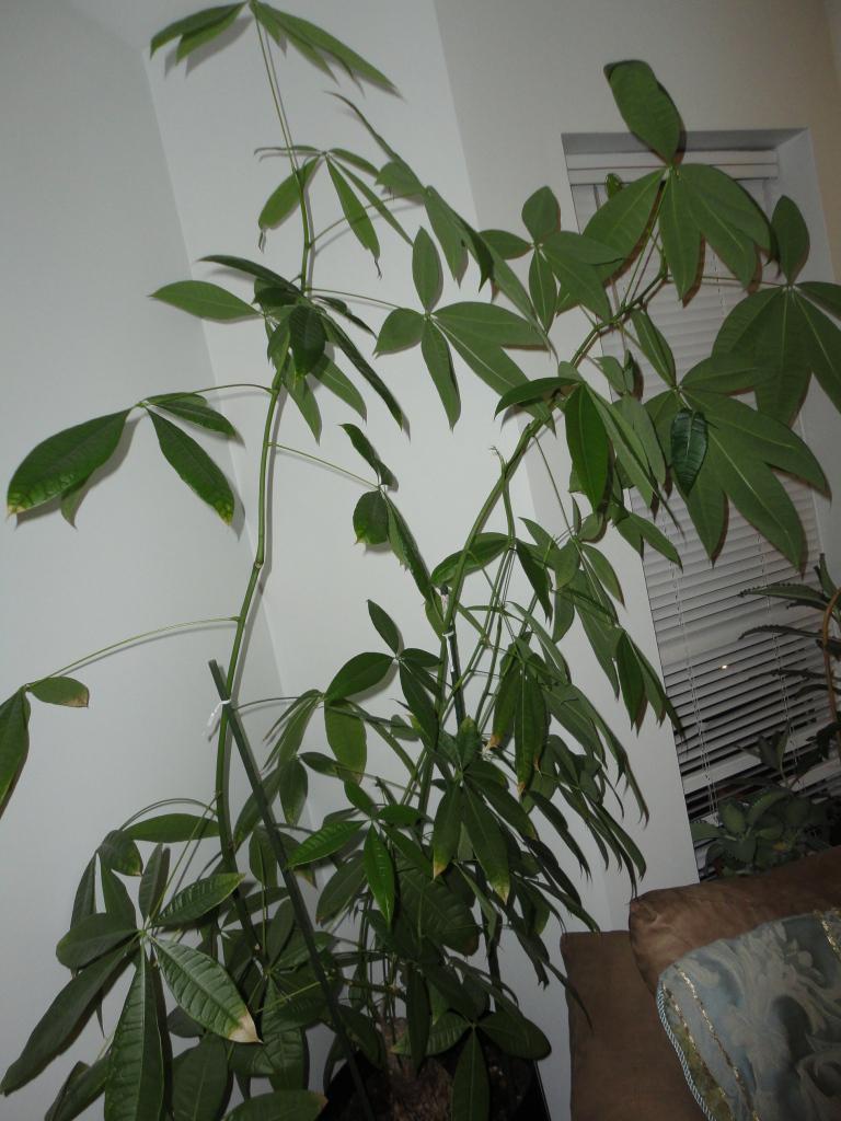 My Money Tree
