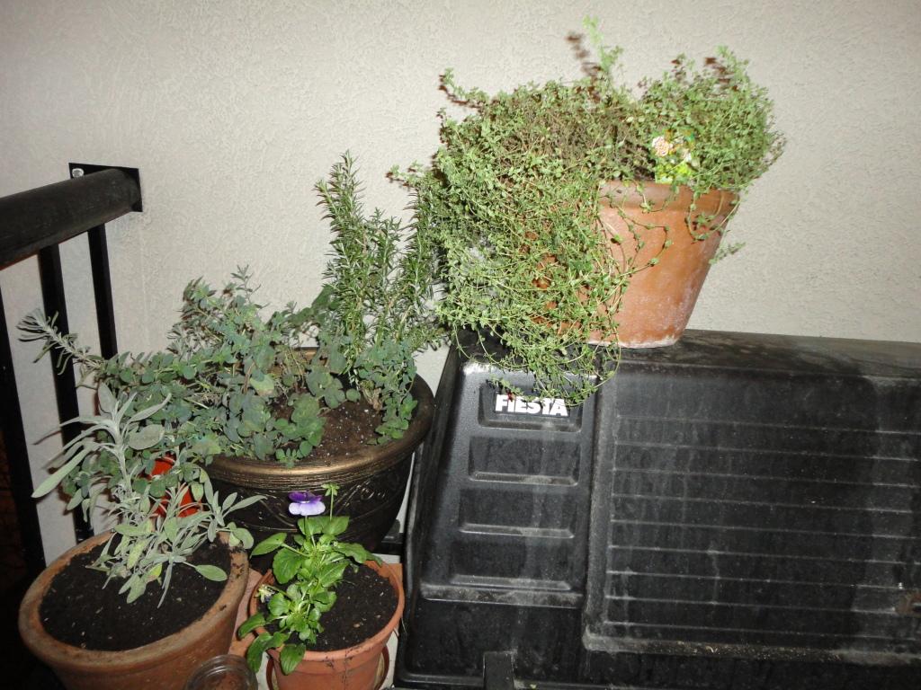 Herbs in November