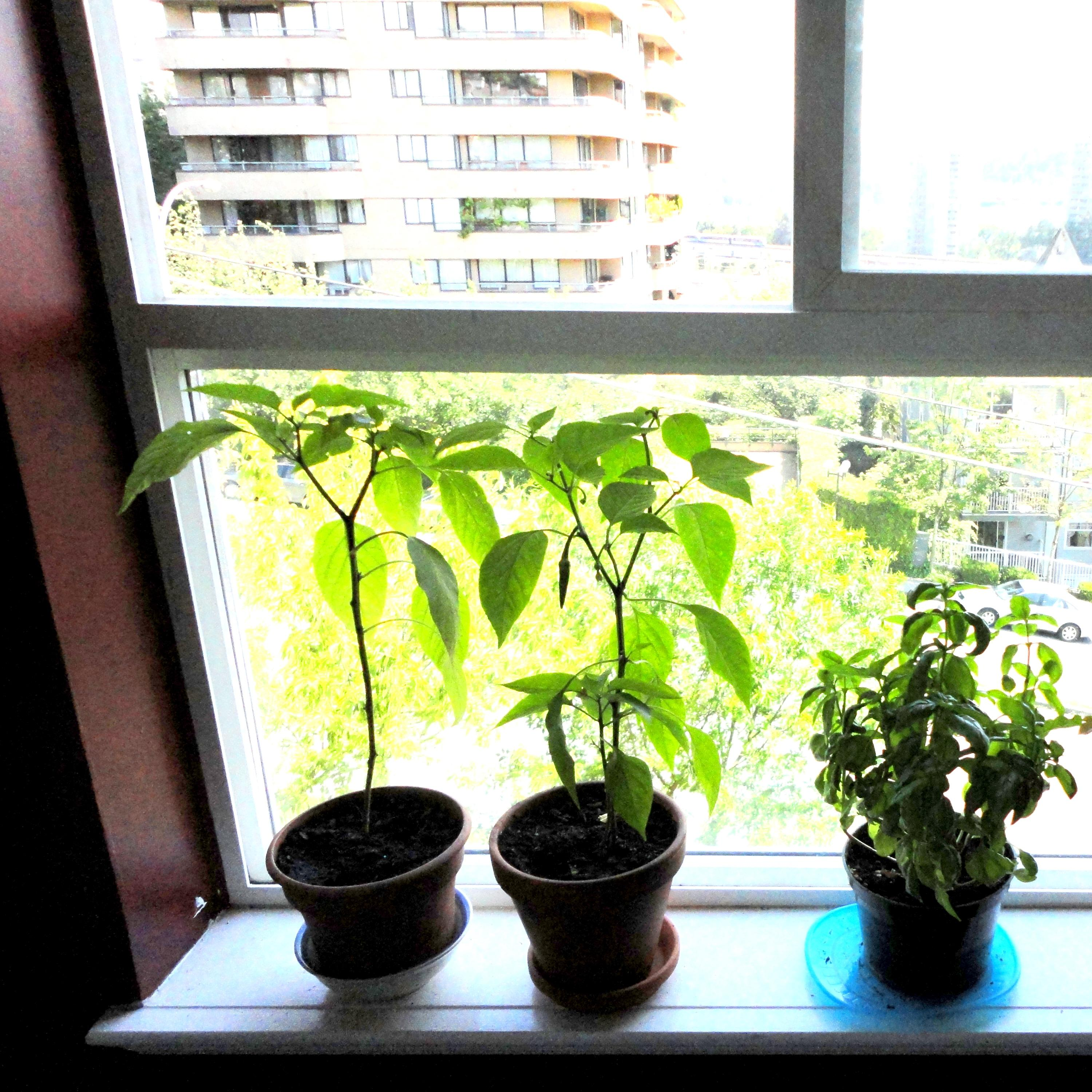 My Window Garden